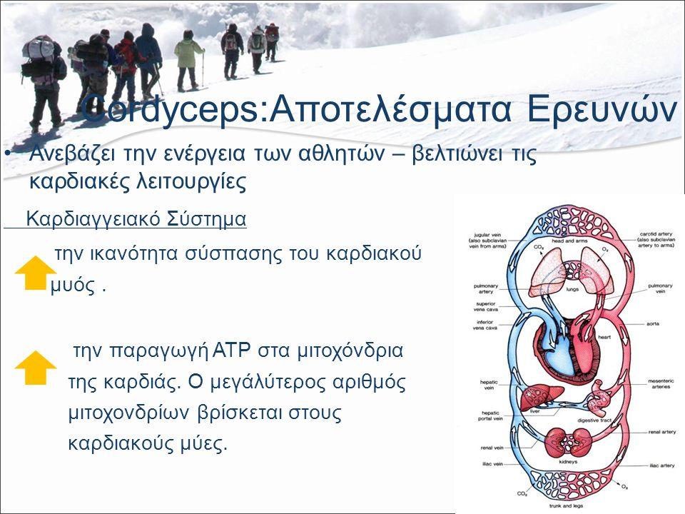 Cordyceps:Αποτελέσματα Ερευνών Ανεβάζει την ενέργεια των αθλητών – βελτιώνει τις καρδιακές λειτουργίες Καρδιαγγειακό Σύστημα την ικανότητα σύσπασης του καρδιακού μυός.
