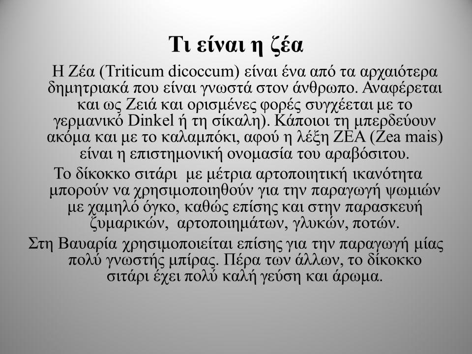 Τι είναι η ζέα Η Ζέα (Triticum dicoccum) είναι ένα από τα αρχαιότερα δημητριακά που είναι γνωστά στον άνθρωπο.