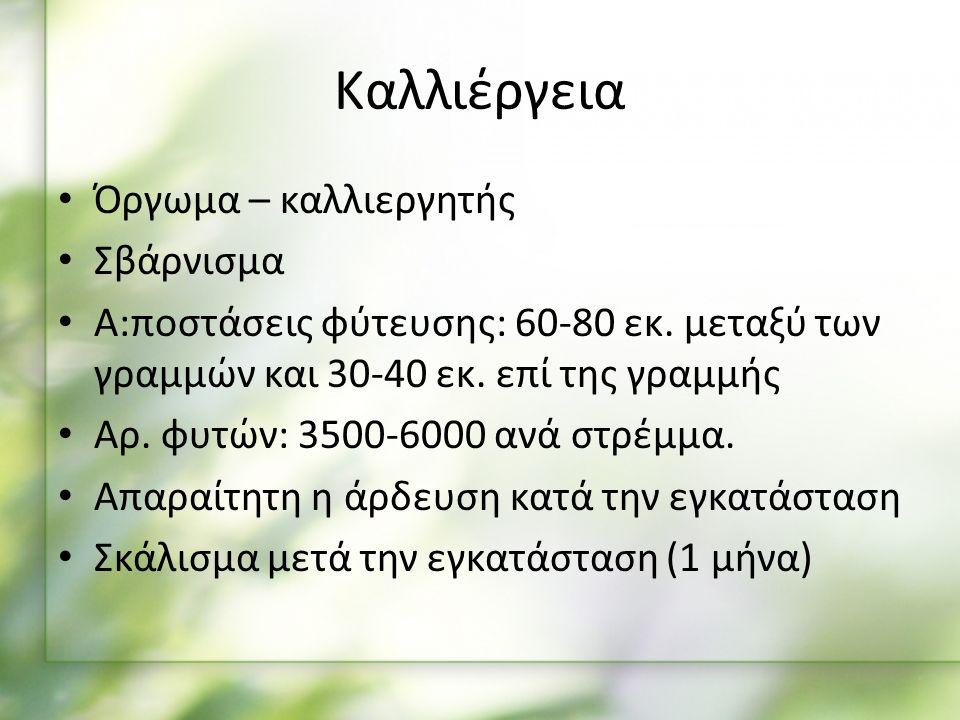 Καλλιέργεια Όργωμα – καλλιεργητής Σβάρνισμα Α:ποστάσεις φύτευσης: 60-80 εκ.