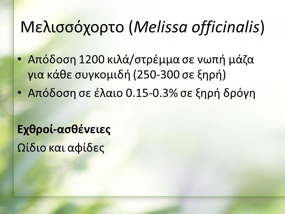 Απόδοση 1200 κιλά/στρέμμα σε νωπή μάζα για κάθε συγκομιδή (250-300 σε ξηρή) Απόδοση σε έλαιο 0.15-0.3% σε ξηρή δρόγη Εχθροί-ασθένειες Ωίδιο και αφίδες Μελισσόχορτο (Melissa officinalis)