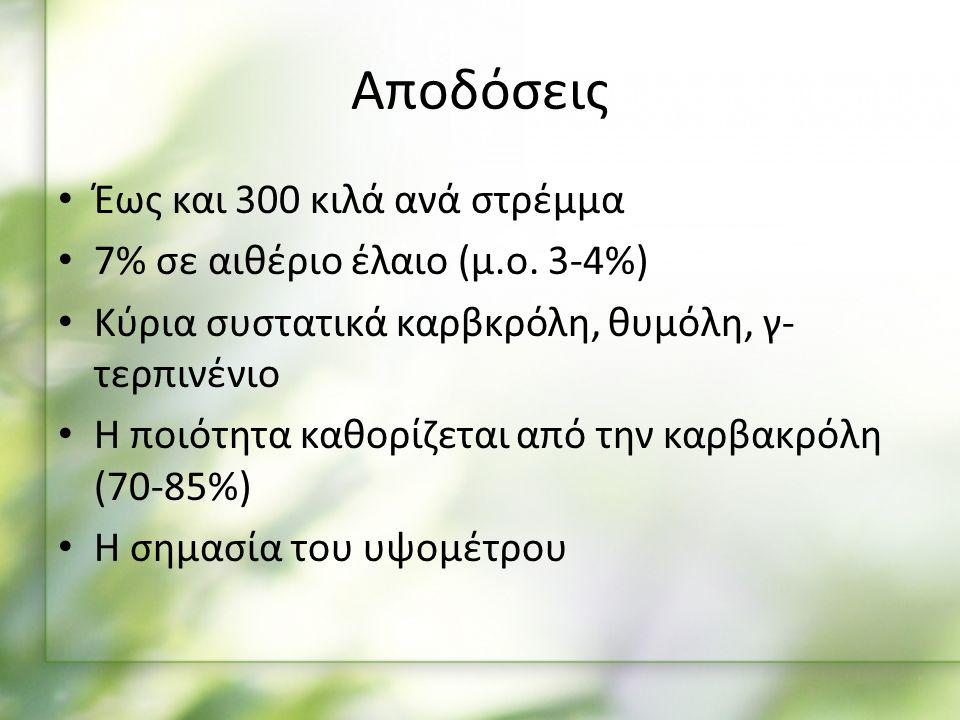 Αποδόσεις Έως και 300 κιλά ανά στρέμμα 7% σε αιθέριο έλαιο (μ.ο.
