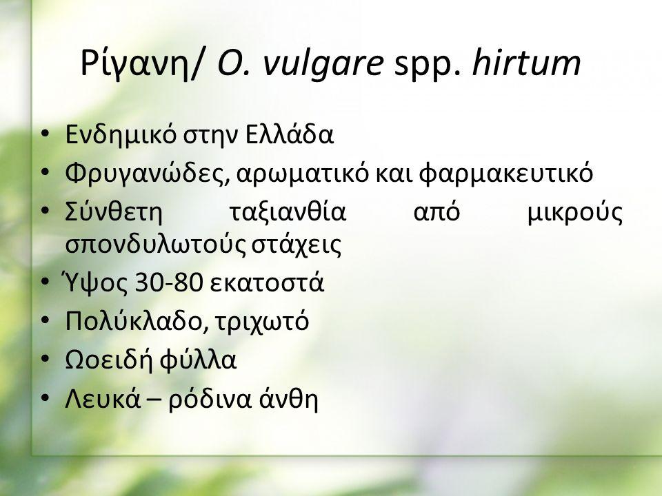 Ενδημικό στην Ελλάδα Φρυγανώδες, αρωματικό και φαρμακευτικό Σύνθετη ταξιανθία από μικρούς σπονδυλωτούς στάχεις Ύψος 30-80 εκατοστά Πολύκλαδο, τριχωτό Ωοειδή φύλλα Λευκά – ρόδινα άνθη Ρίγανη/ O.