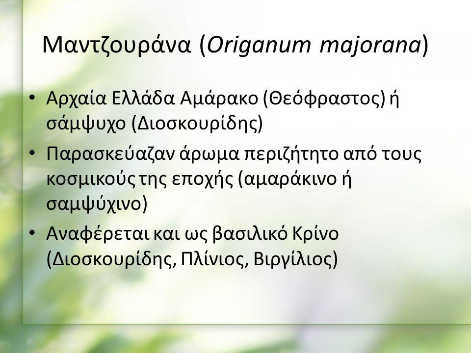 Μαντζουράνα (Origanum majorana) Αρχαία Ελλάδα Αμάρακο (Θεόφραστος) ή σάμψυχο (Διοσκουρίδης) Παρασκεύαζαν άρωμα περιζήτητο από τους κοσμικούς της εποχής (αμαράκινο ή σαμψύχινο) Αναφέρεται και ως βασιλικό Κρίνο (Διοσκουρίδης, Πλίνιος, Βιργίλιος)