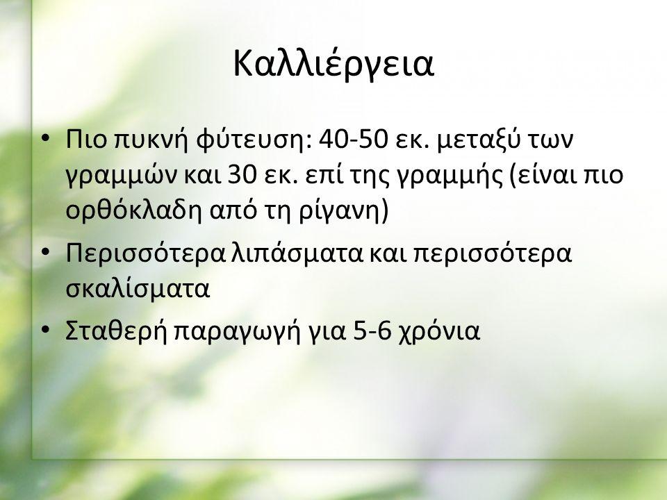 Καλλιέργεια Πιο πυκνή φύτευση: 40-50 εκ. μεταξύ των γραμμών και 30 εκ.