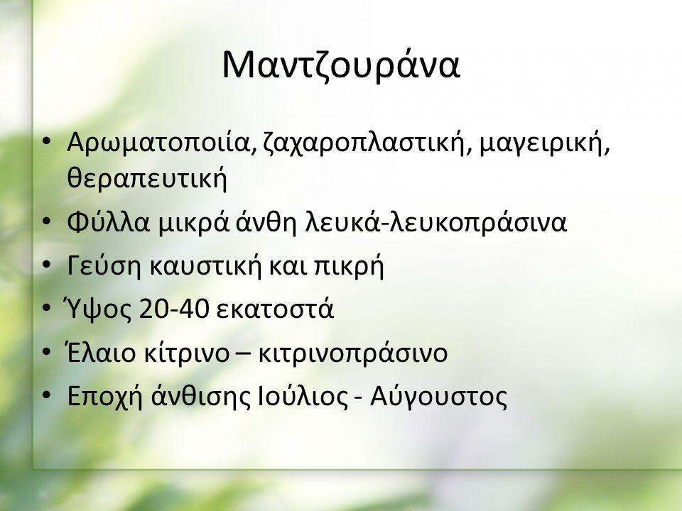Αρωματοποιία, ζαχαροπλαστική, μαγειρική, θεραπευτική Φύλλα μικρά άνθη λευκά-λευκοπράσινα Γεύση καυστική και πικρή Ύψος 20-40 εκατοστά Έλαιο κίτρινο – κιτρινοπράσινο Εποχή άνθισης Ιούλιος - Αύγουστος Μαντζουράνα