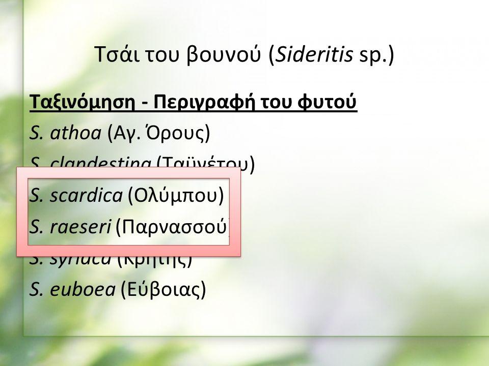 Ταξινόμηση - Περιγραφή του φυτού S. athoa (Αγ. Όρους) S.