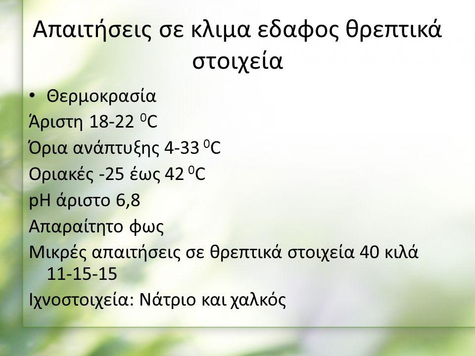 Απαιτήσεις σε κλιμα εδαφος θρεπτικά στοιχεία Θερμοκρασία Άριστη 18-22 0 C Όρια ανάπτυξης 4-33 0 C Οριακές -25 έως 42 0 C pH άριστο 6,8 Απαραίτητο φως Μικρές απαιτήσεις σε θρεπτικά στοιχεία 40 κιλά 11-15-15 Ιχνοστοιχεία: Νάτριο και χαλκός