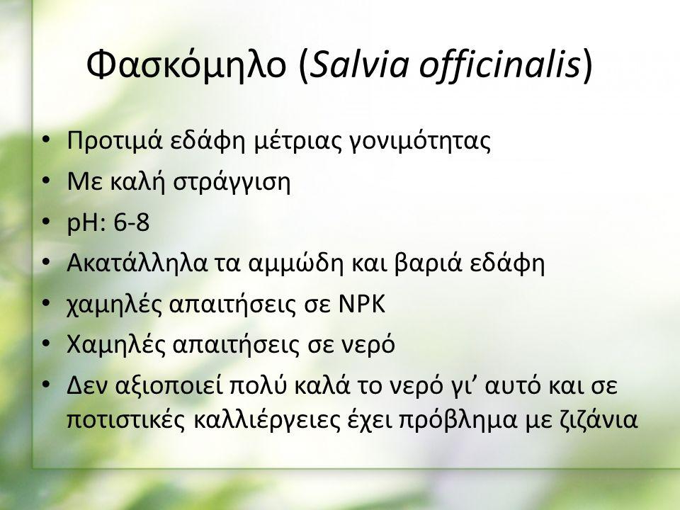 Προτιμά εδάφη μέτριας γονιμότητας Με καλή στράγγιση pH: 6-8 Ακατάλληλα τα αμμώδη και βαριά εδάφη χαμηλές απαιτήσεις σε NPK Χαμηλές απαιτήσεις σε νερό Δεν αξιοποιεί πολύ καλά το νερό γι' αυτό και σε ποτιστικές καλλιέργειες έχει πρόβλημα με ζιζάνια Φασκόμηλο (Salvia officinalis)