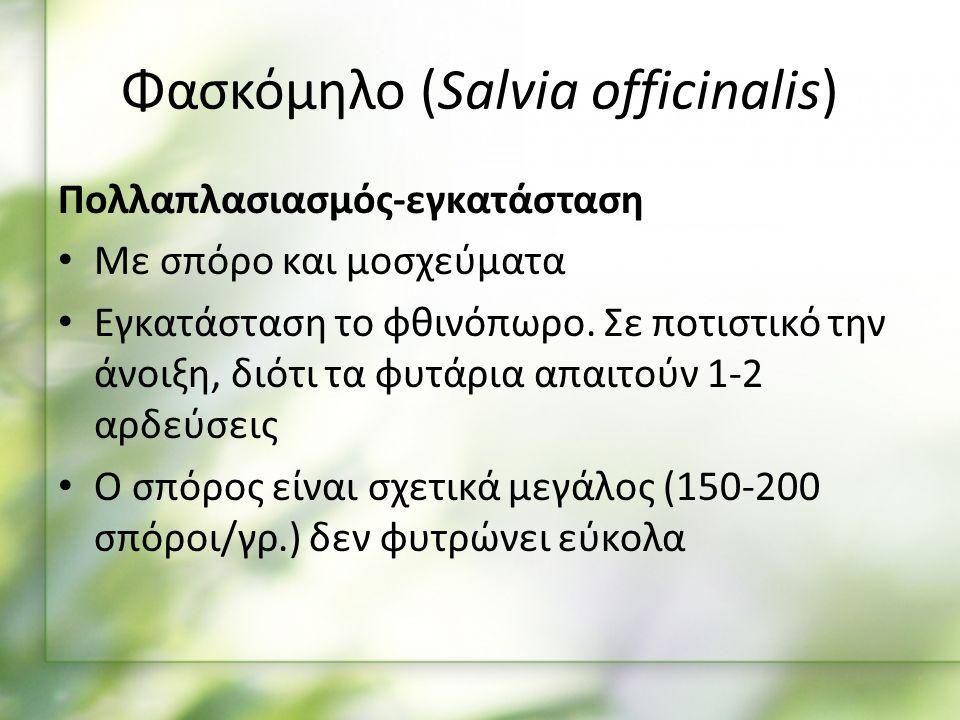 Πολλαπλασιασμός-εγκατάσταση Με σπόρο και μοσχεύματα Εγκατάσταση το φθινόπωρο.
