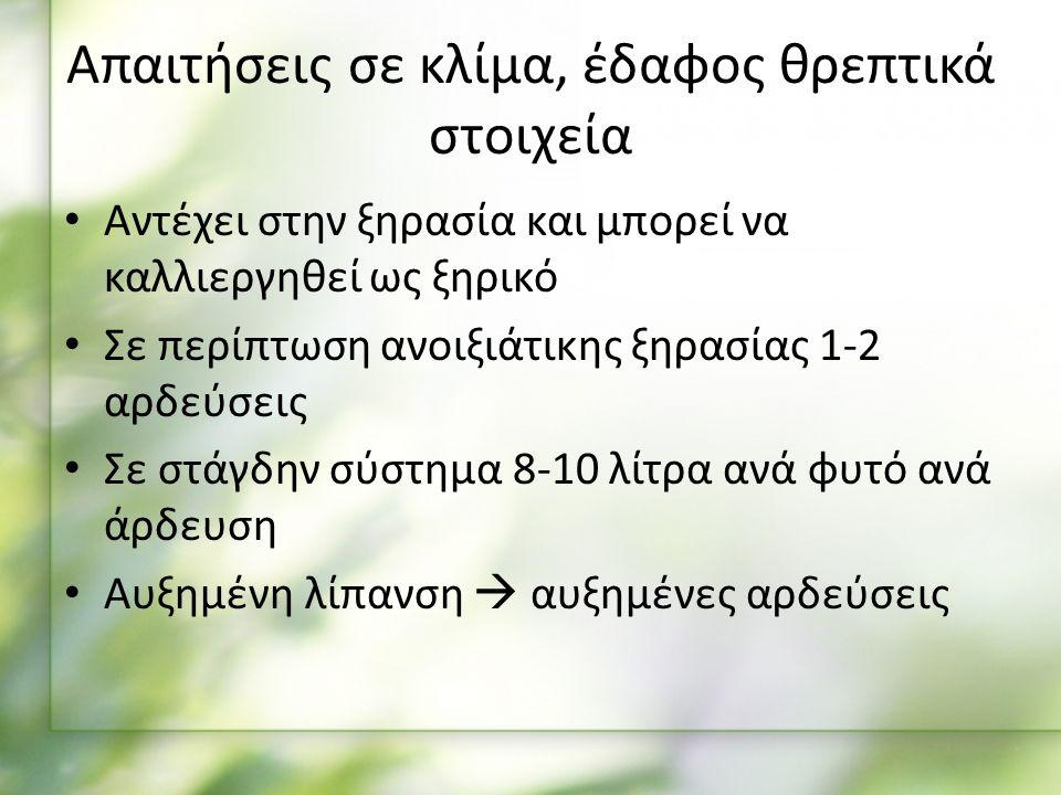 Συλλογή – Απόδοση Η συλλογή αφορά ανθισμένες κορυφές και φύλλα του Φυτού Γίνεται στο στάδιο της άνθισης (Μάιος – Ιούνιος) Η απόδοσή του σε έλαιο κυμαίνεται από 3 – 6,4% Θρούμπι