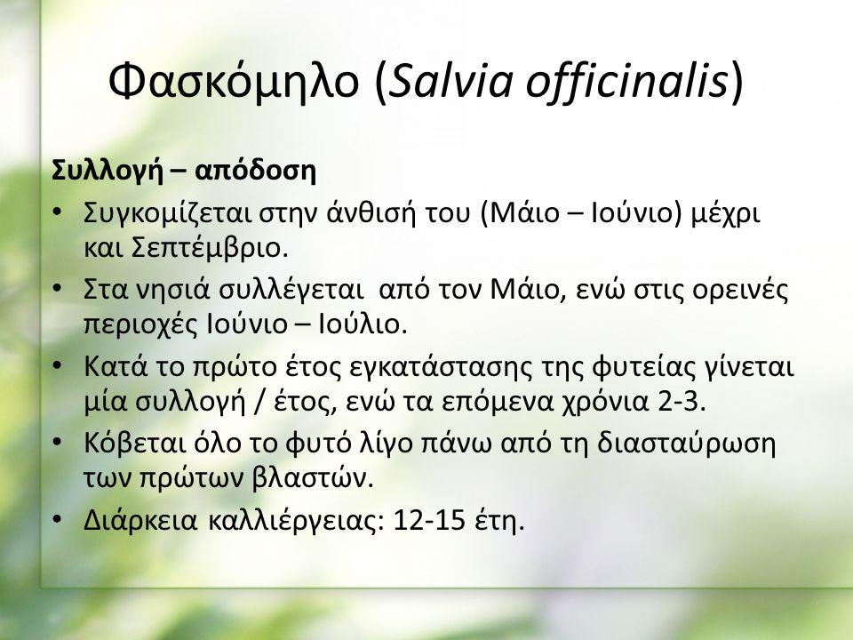 Συλλογή – απόδοση Συγκομίζεται στην άνθισή του (Μάιο – Ιούνιο) μέχρι και Σεπτέμβριο.