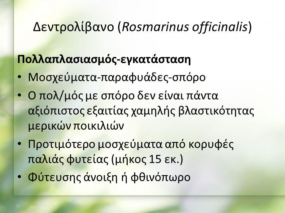 Πολλαπλασιασμός-εγκατάσταση Μοσχεύματα-παραφυάδες-σπόρο Ο πολ/μός με σπόρο δεν είναι πάντα αξιόπιστος εξαιτίας χαμηλής βλαστικότητας μερικών ποικιλιών Προτιμότερο μοσχεύματα από κορυφές παλιάς φυτείας (μήκος 15 εκ.) Φύτευσης άνοιξη ή φθινόπωρο Δεντρολίβανο (Rosmarinus officinalis)