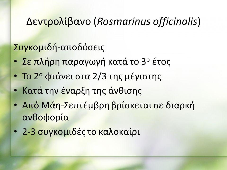 Συγκομιδή-αποδόσεις Σε πλήρη παραγωγή κατά το 3 ο έτος Το 2 ο φτάνει στα 2/3 της μέγιστης Κατά την έναρξη της άνθισης Από Μάη-Σεπτέμβρη βρίσκεται σε διαρκή ανθοφορία 2-3 συγκομιδές το καλοκαίρι Δεντρολίβανο (Rosmarinus officinalis)