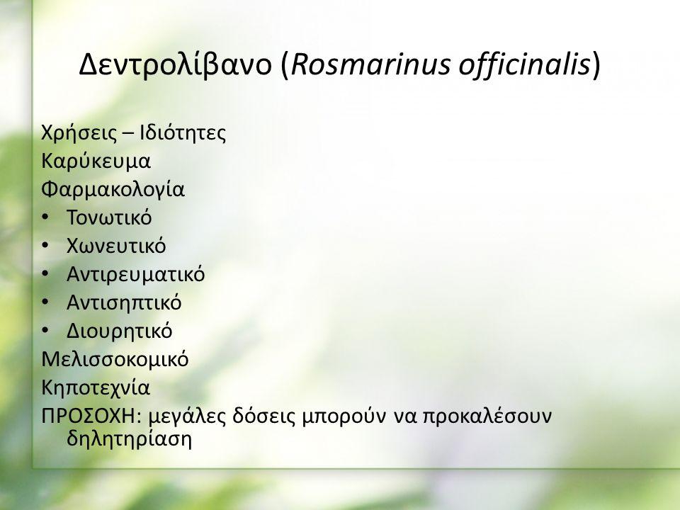 Χρήσεις – Ιδιότητες Καρύκευμα Φαρμακολογία Τονωτικό Χωνευτικό Αντιρευματικό Αντισηπτικό Διουρητικό Μελισσοκομικό Κηποτεχνία ΠΡΟΣΟΧΗ: μεγάλες δόσεις μπορούν να προκαλέσουν δηλητηρίαση Δεντρολίβανο (Rosmarinus officinalis)