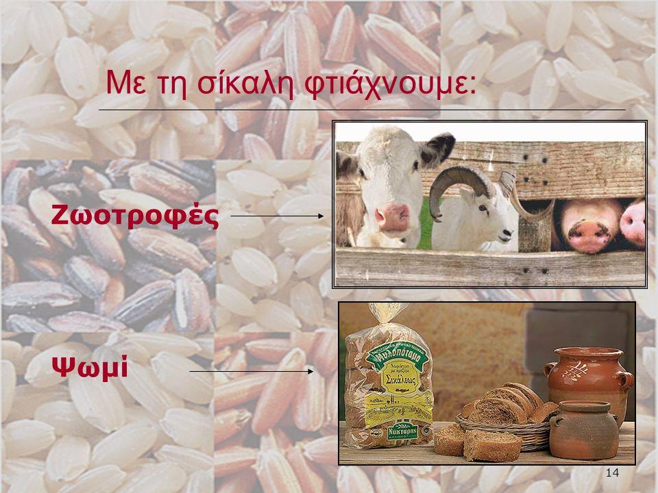 14 Με τη σίκαλη φτιάχνουμε: Ζωοτροφές Ψωμί