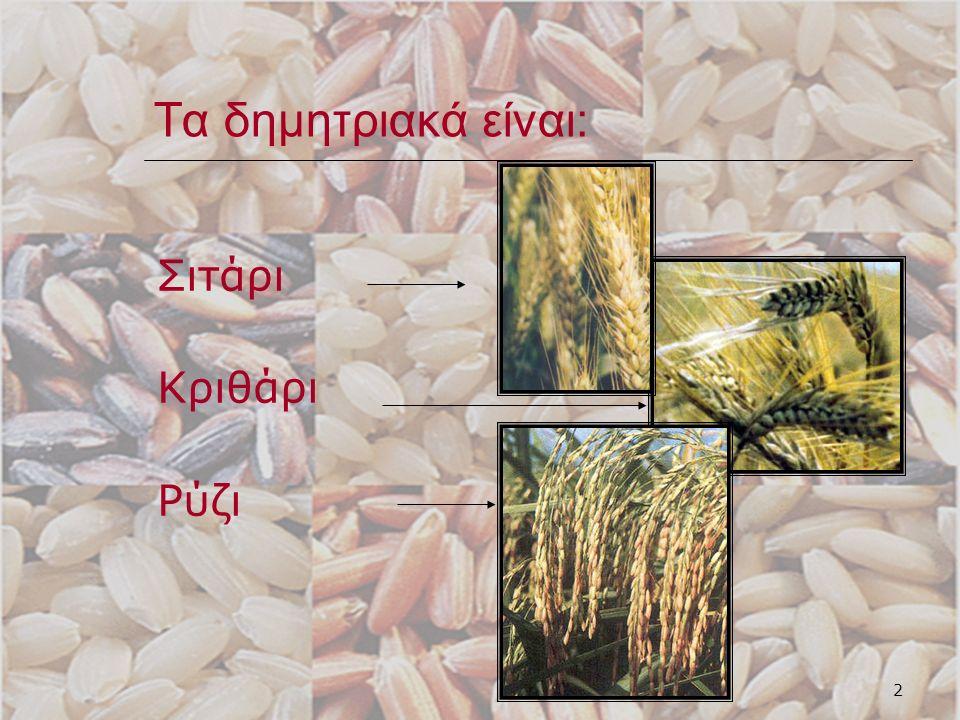 3 Τα δημητριακά είναι: Αραβόσιτος (σιταροπούλα, καλαμπόκι) Βρώμη Σίκαλη
