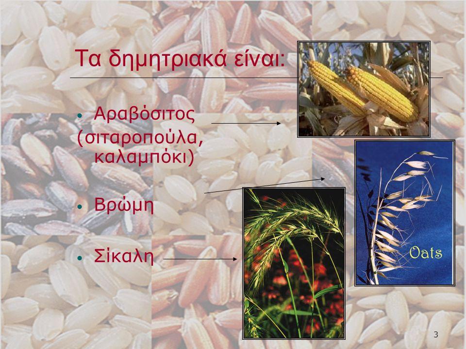 4 Το σιτάρι είναι η βάση της διατροφής μας