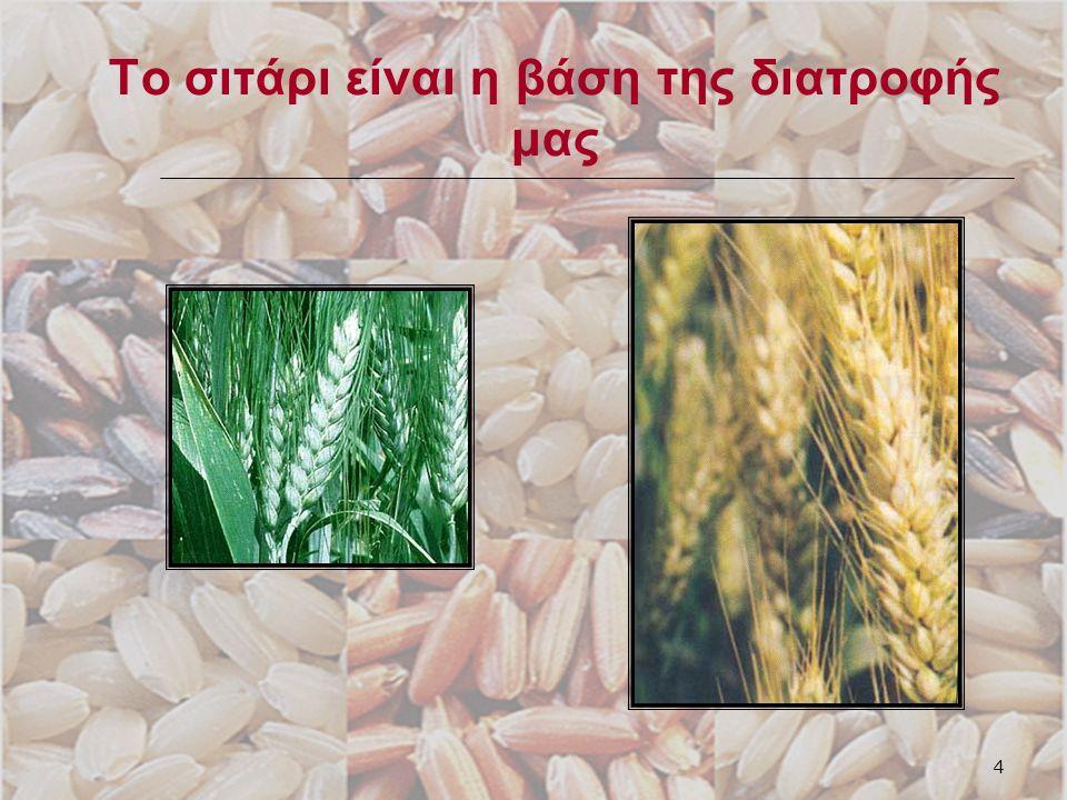 5 Τα μέρη του κόκκου του σιταριού Φλούδα Ψίχα Φύτρο