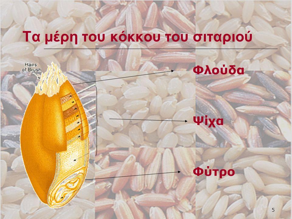 6 Με το σιτάρι φτιάχνουμε: Αλεύρι Σιμιγδάλι πουργούρι
