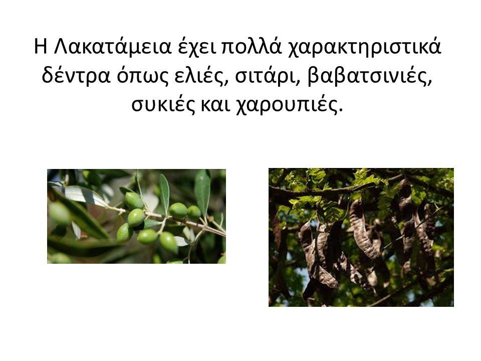 Η Λακατάμεια έχει πολλά χαρακτηριστικά δέντρα όπως ελιές, σιτάρι, βαβατσινιές, συκιές και χαρουπιές.