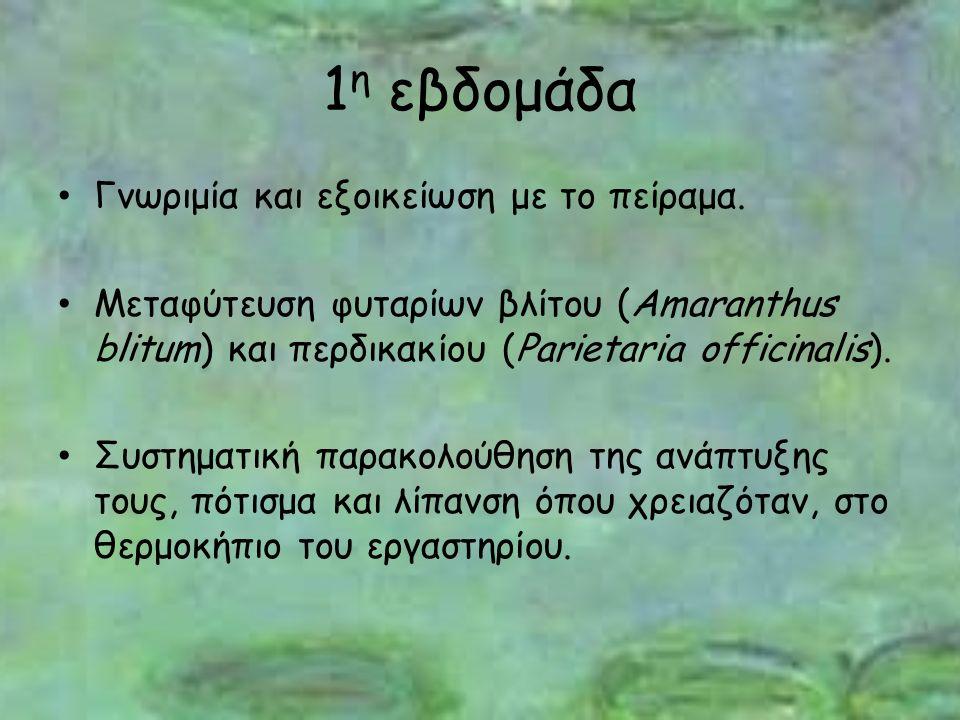 1 η εβδομάδα Γνωριμία και εξοικείωση με το πείραμα. Μεταφύτευση φυταρίων βλίτου (Amaranthus blitum) και περδικακίου (Parietaria officinalis). Συστηματ