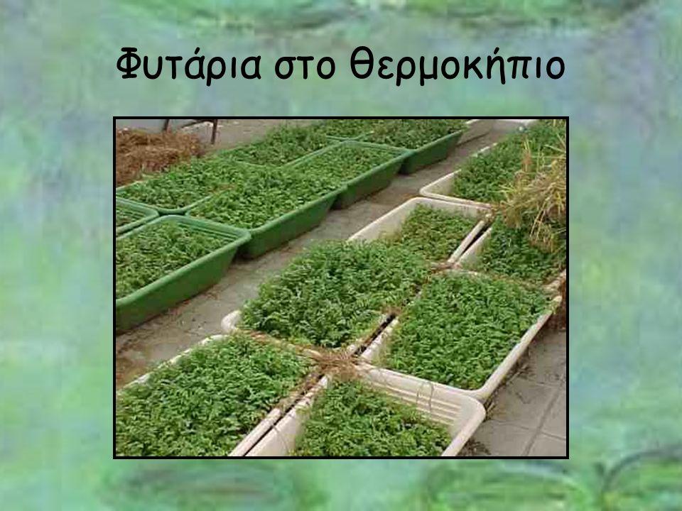 Φυτάρια στο θερμοκήπιο