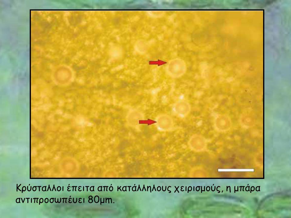 Κρύσταλλοι έπειτα από κατάλληλους χειρισμούς, η μπάρα αντιπροσωπέυει 80μm.