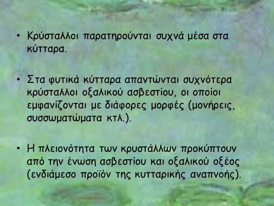 Το πείραμα θα συνεχιστεί και θα αποτελέσει τη διδακτορική διατριβή του Ανδρέα Γιαννόπουλου.