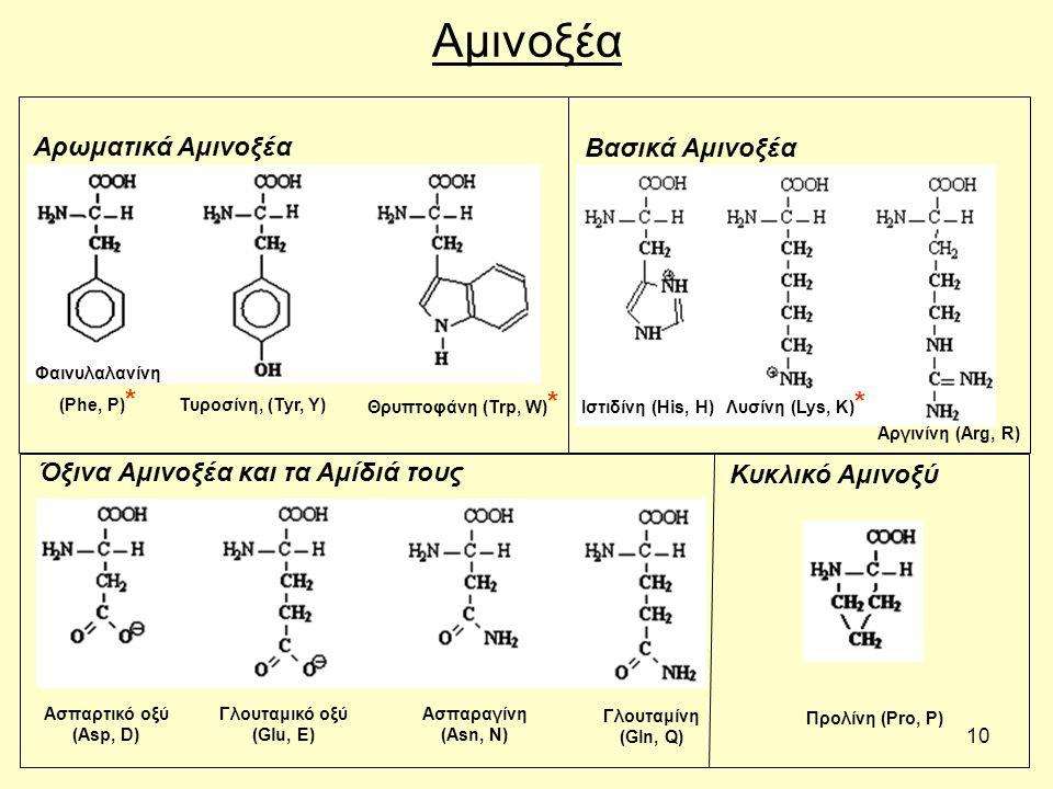 10 Αμινοξέα Τυροσίνη, (Tyr, Y) Θρυπτοφάνη (Trp, W) * Αρωματικά Αμινοξέα Γλουταμικό οξύ (Glu, E) Ασπαραγίνη (Asn, N) Αργινίνη (Arg, R) Όξινα Αμινοξέα και τα Αμίδιά τους Φαινυλαλανίνη (Phe, P) * Ιστιδίνη (His, H) Λυσίνη (Lys, K) * Γλουταμίνη (Gln, Q) Ασπαρτικό οξύ (Asp, D) Βασικά Αμινοξέα Προλίνη (Pro, P) Κυκλικό Αμινοξύ