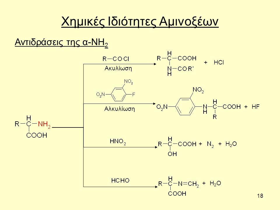 18 Χημικές Ιδιότητες Αμινοξέων Αντιδράσεις της α-ΝΗ 2 HCl Ακυλίωση Αλκυλίωση + + + H2OH2O HF + + H2OH2O