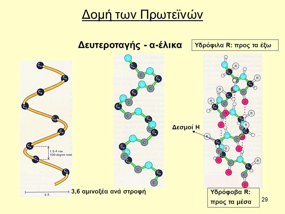 29 Δομή των Πρωτεϊνών Δευτεροταγής - α-έλικα 3,6 αμινοξέα ανά στροφή Δεσμοί Η Υδρόφιλα R: προς τα έξω Υδρόφοβα R: προς τα μέσα