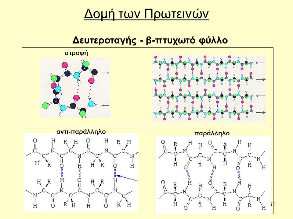 31 Δομή των Πρωτεινών Δευτεροταγής - β-πτυχωτό φύλλο αντι-παράλληλο παράλληλο στροφή