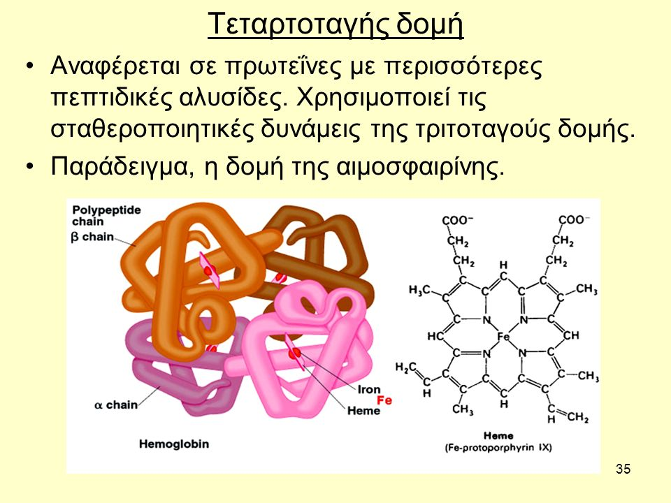 35 Τεταρτοταγής δομή Aναφέρεται σε πρωτεΐνες με περισσότερες πεπτιδικές αλυσίδες. Χρησιμοποιεί τις σταθεροποιητικές δυνάμεις της τριτοταγούς δομής. Πα