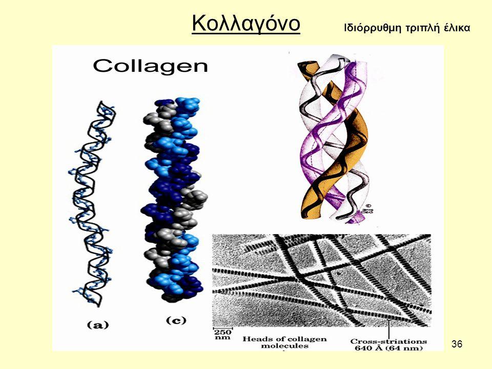 36 Κολλαγόνο Ιδιόρρυθμη τριπλή έλικα