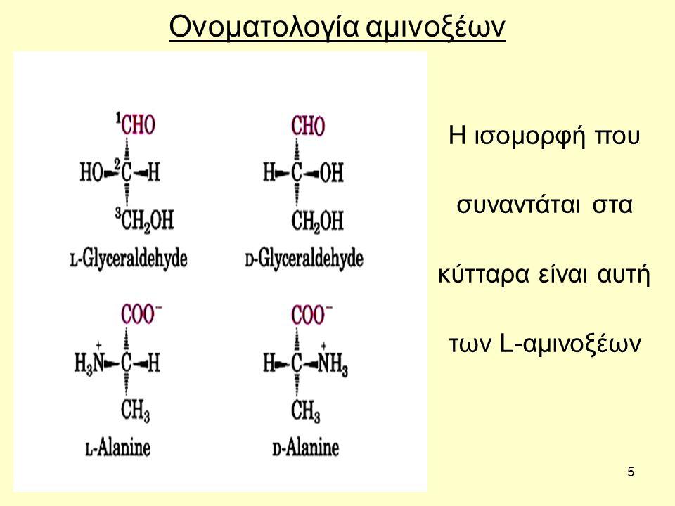 5 Ονοματολογία αμινοξέων Η ισομορφή που συναντάται στα κύτταρα είναι αυτή των L-αμινοξέων