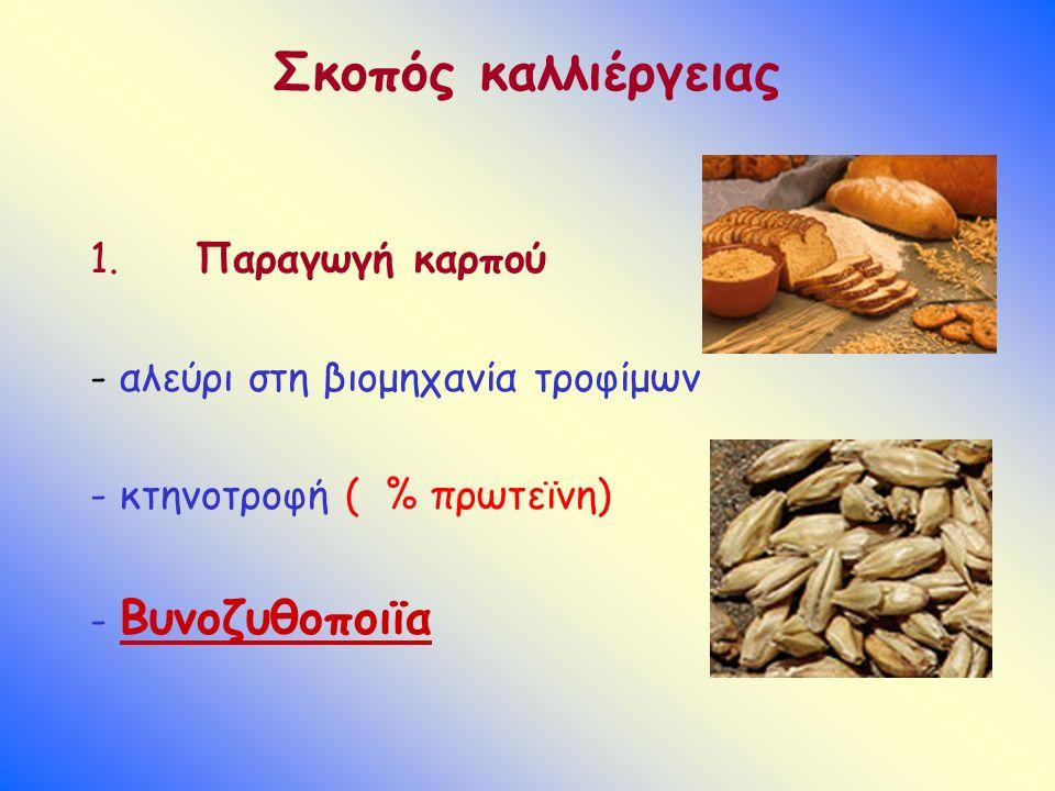 Σκοπός καλλιέργειας 1. Παραγωγή καρπού - αλεύρι στη βιομηχανία τροφίμων - κτηνοτροφή ( % πρωτεϊνη) - Βυνοζυθοποιϊα