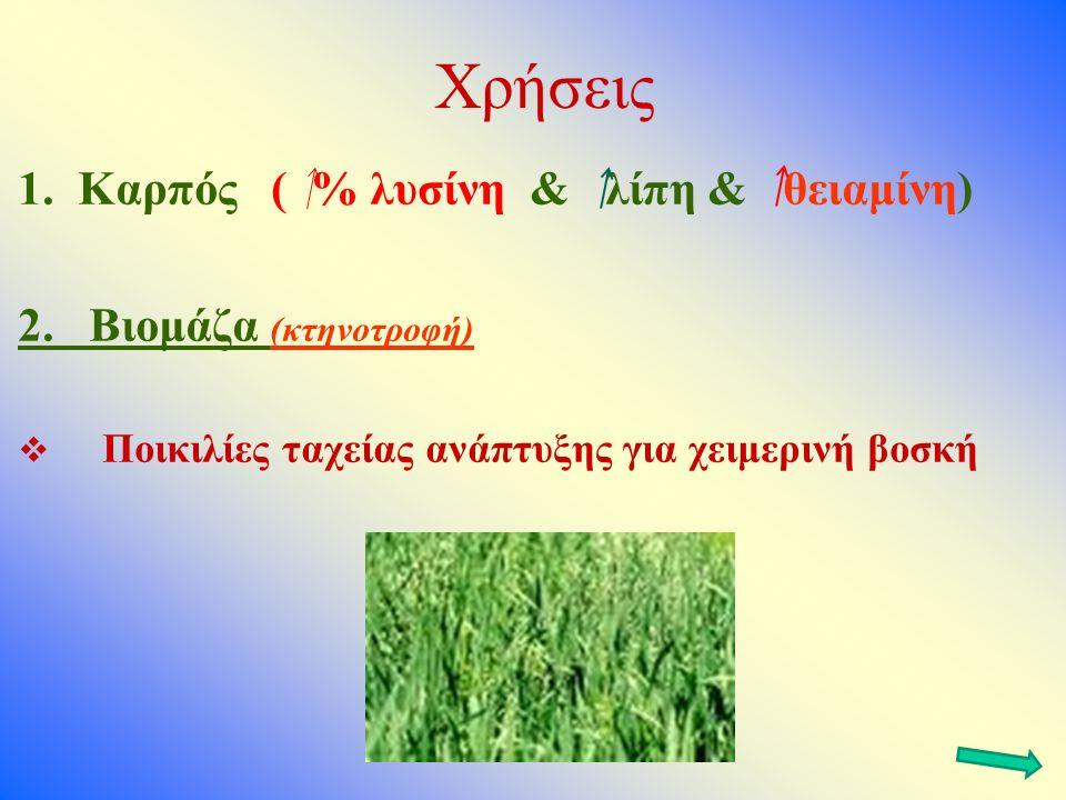Χρήσεις 1.Καρπός ( % λυσίνη & λίπη & θειαμίνη) 2.