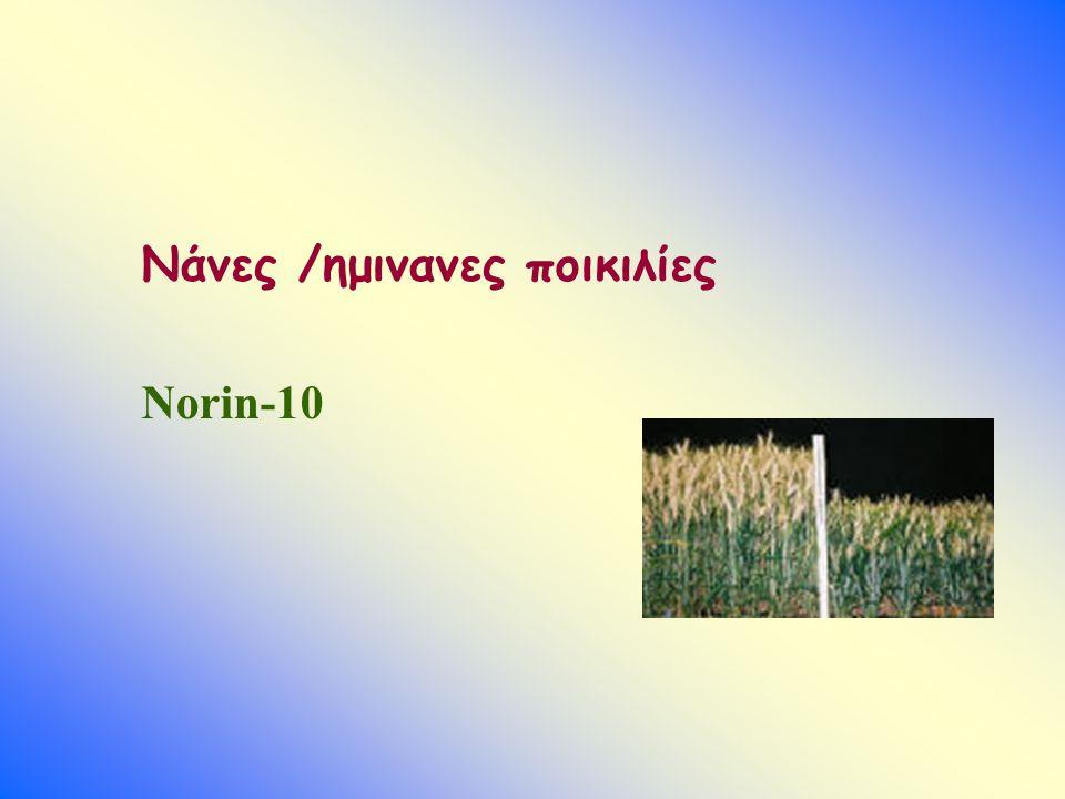 Νάνες /ημινανες ποικιλίες Norin-10