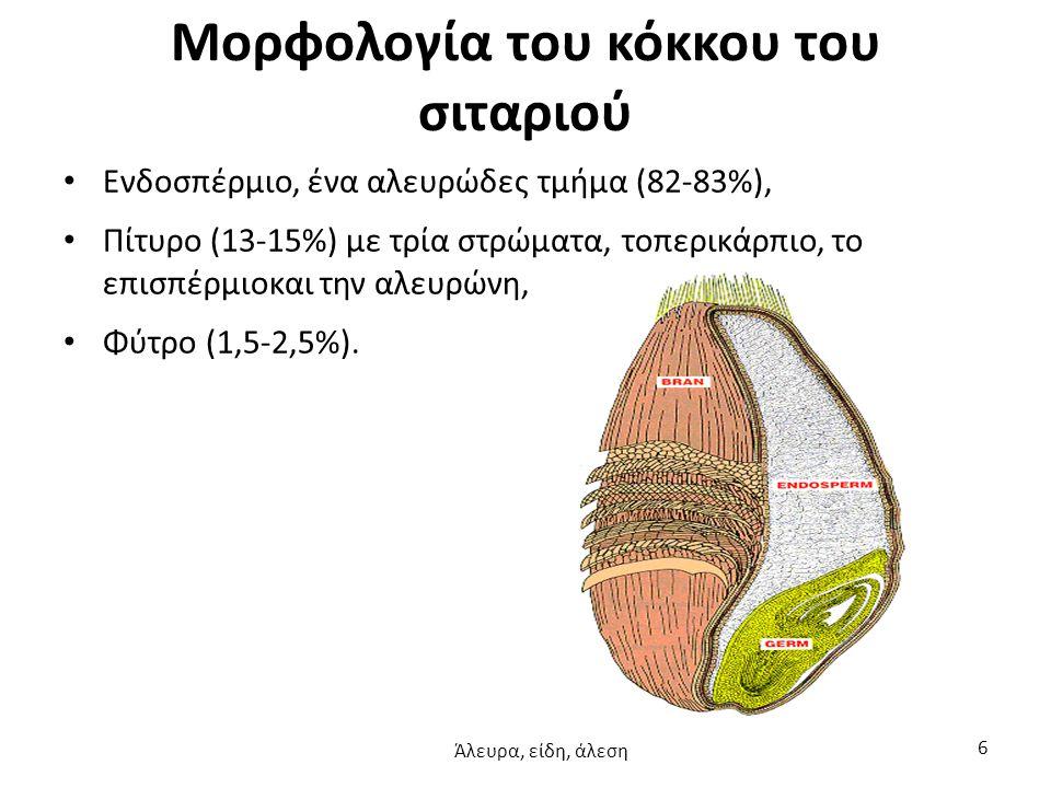 Μορφολογία του κόκκου του σιταριού Ενδοσπέρμιο, ένα αλευρώδες τμήμα (82-83%), Πίτυρο (13-15%) με τρία στρώματα, τοπερικάρπιο, το επισπέρμιοκαι την αλε