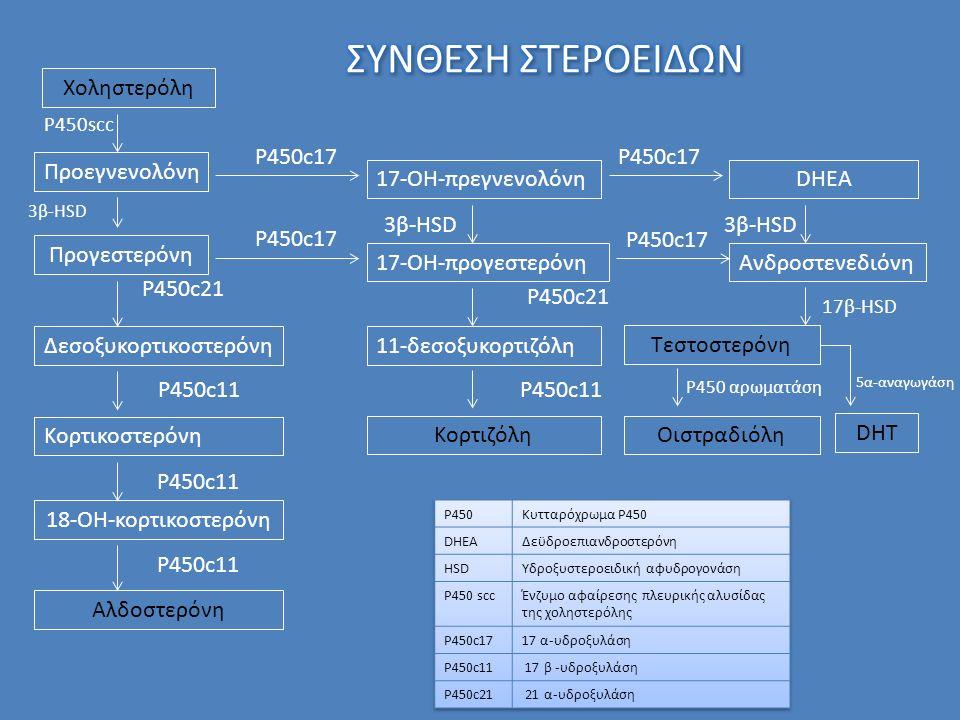 Χοληστερόλη Προεγνενολόνη Προγεστερόνη Δεσοξυκορτικοστερόνη Κορτικοστερόνη 18-ΟΗ-κορτικοστερόνη Αλδοστερόνη P450scc 3β-HSD P450c21 P450c11 17-ΟΗ-πρεγνενολόνηDHEA 17-OH-προγεστερόνηΑνδροστενεδιόνη P450c17 11-δεσοξυκορτιζόλη Κορτιζόλη P450c21 P450c11 Τεστοστερόνη Οιστραδιόλη 17β-HSD P450 αρωματάση 3β-HSD 5α-αναγωγάση DHT
