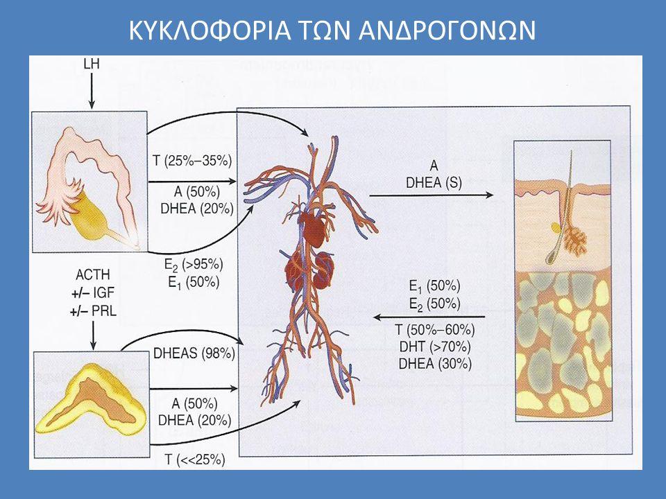 MW Relative androgenic strength Dehydroepiandrosterone sulfate1300-6800 1 Androstenedione3.0-5.03.5-7.02 Testosterone ( 1 -2% free)10-35<3.520 Dihydrotestosterone0.87-2.60.17-1.060 ΙΣΧΥΣ ΤΩΝ ΑΝΔΡΟΓΟΝΩΝ