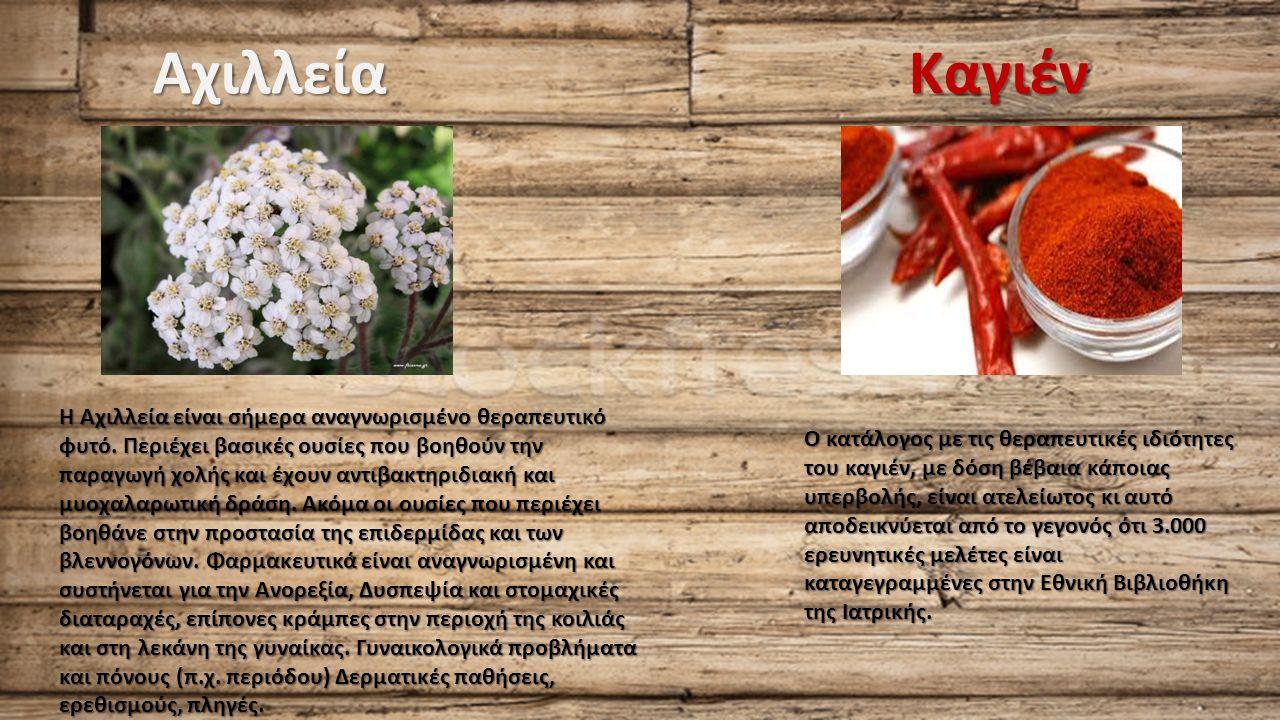 Αχιλλεία Η Αχιλλεία είναι σήμερα αναγνωρισμένο θεραπευτικό φυτό.
