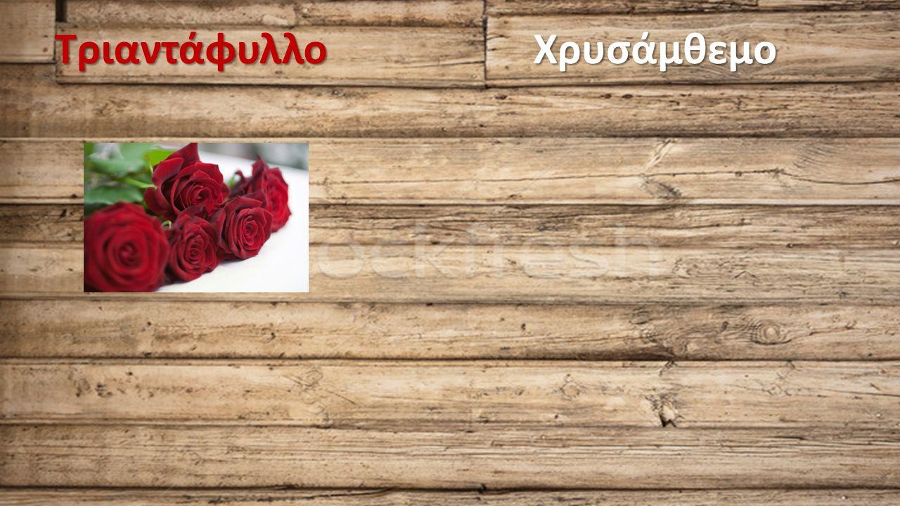 ΤριαντάφυλλοΧρυσάμθεμο