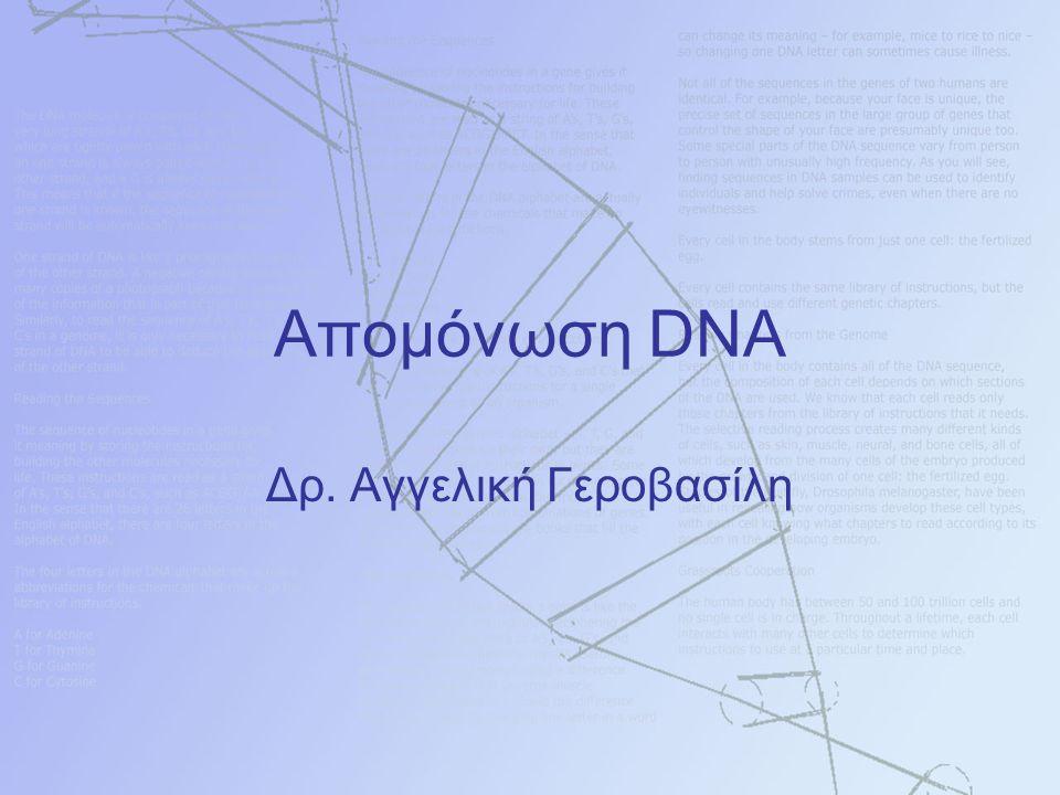 Απομόνωση DNA Δρ. Αγγελική Γεροβασίλη