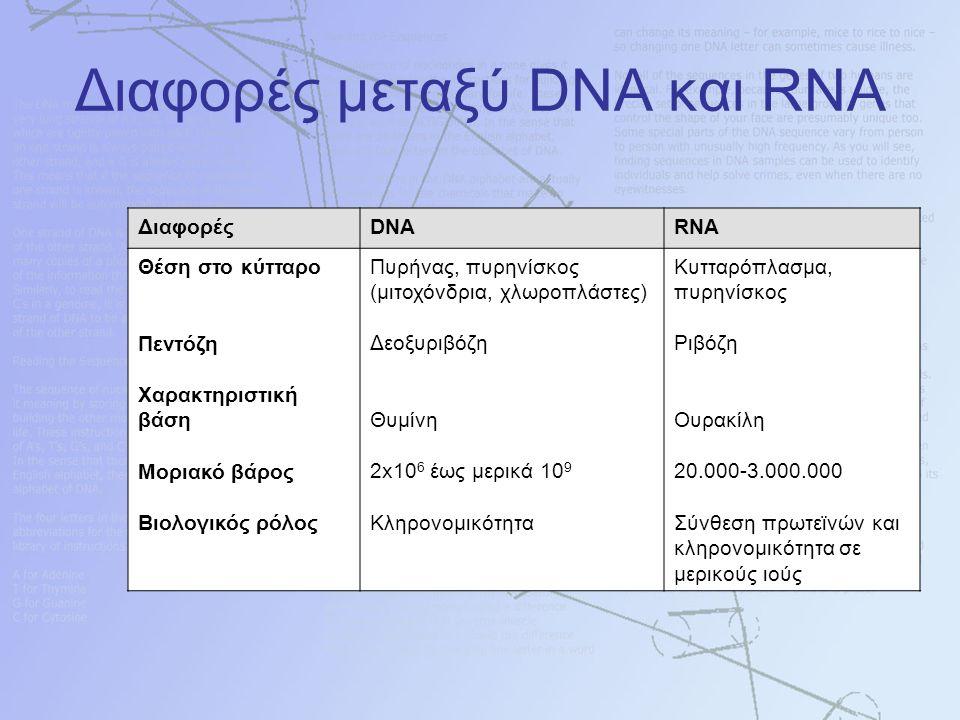 Διαφορές μεταξύ DNA και RNA ΔιαφορέςDNARNA Θέση στο κύτταρο Πεντόζη Χαρακτηριστική βάση Μοριακό βάρος Βιολογικός ρόλος Πυρήνας, πυρηνίσκος (μιτοχόνδρια, χλωροπλάστες) Δεοξυριβόζη Θυμίνη 2x10 6 έως μερικά 10 9 Κληρονομικότητα Κυτταρόπλασμα, πυρηνίσκος Ριβόζη Ουρακίλη 20.000-3.000.000 Σύνθεση πρωτεϊνών και κληρονομικότητα σε μερικούς ιούς