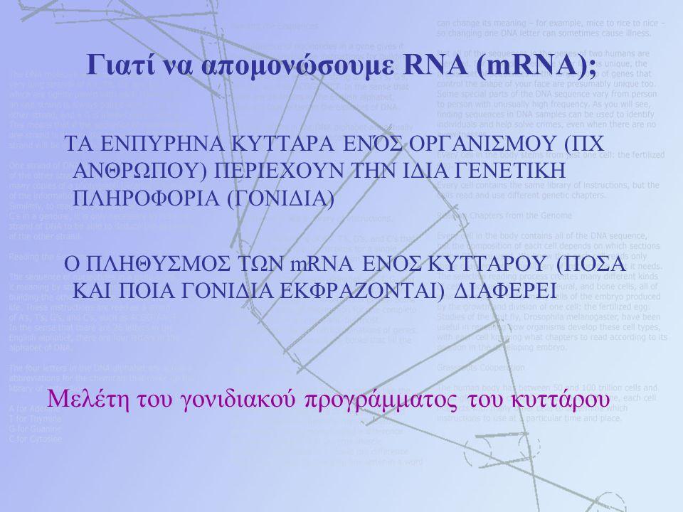Γιατί να απομoνώσουμε RNA (mRNA); ΤΑ ΕΝΠΥΡΗΝΑ ΚΥΤΤΑΡΑ ΕΝΌΣ ΟΡΓΑΝΙΣΜΟΥ (ΠΧ ΑΝΘΡΩΠΟΥ) ΠΕΡΙΕΧΟΥΝ ΤΗΝ ΙΔΙΑ ΓΕΝΕΤΙΚΗ ΠΛΗΡΟΦΟΡΙΑ (ΓΟΝΙΔΙΑ) Ο ΠΛΗΘΥΣΜΟΣ ΤΩΝ mRNA ΕΝΟΣ ΚΥΤΤΑΡΟΥ (ΠΟΣΑ ΚΑΙ ΠΟΙΑ ΓΟΝΙΔΙΑ ΕΚΦΡΑΖΟΝΤΑΙ) ΔΙΑΦΕΡΕΙ Μελέτη του γονιδιακού προγράμματος του κυττάρου