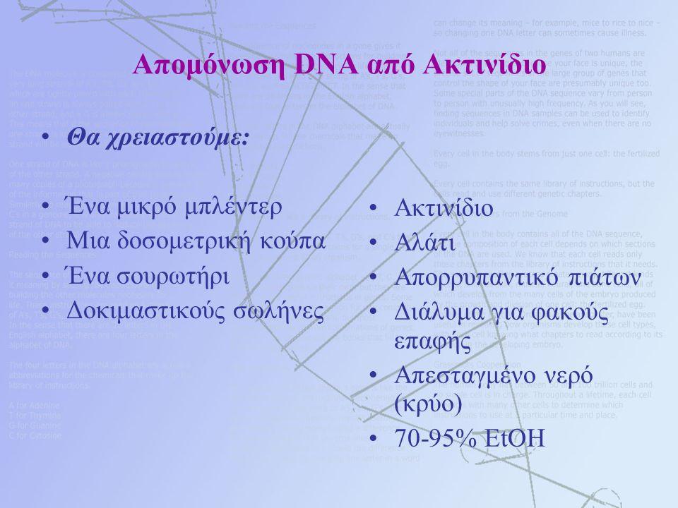Απομόνωση DNA από Ακτινίδιο Θα χρειαστούμε: Ένα μικρό μπλέντερ Μια δοσομετρική κούπα Ένα σουρωτήρι Δοκιμαστικούς σωλήνες Ακτινίδιο Αλάτι Απορρυπαντικό πιάτων Διάλυμα για φακούς επαφής Απεσταγμένο νερό (κρύο) 70-95% EtOH