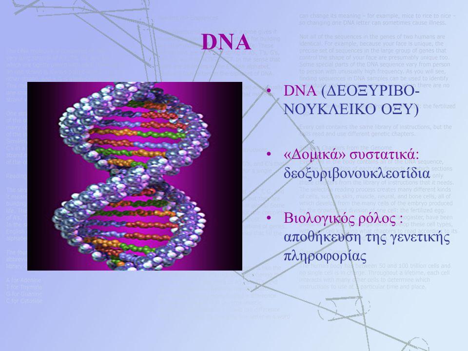 DNA DNA (ΔΕΟΞΥΡΙΒΟ- ΝΟΥΚΛΕΙΚΟ ΟΞΥ) «Δομικά» συστατικά: δεοξυριβονουκλεοτίδια Βιολογικός ρόλος : αποθήκευση της γενετικής πληροφορίας
