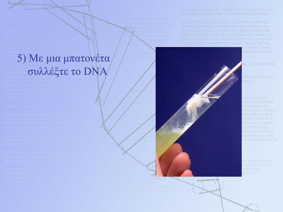 5) Με μια μπατονέτα συλλέξτε το DNA