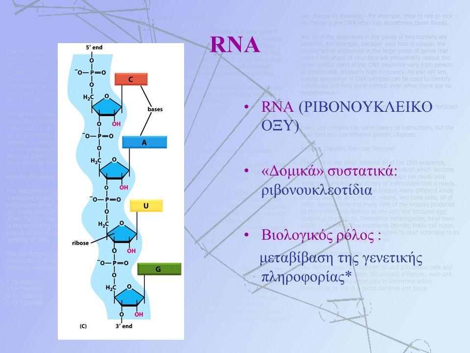 RNA RNA (ΡΙΒΟΝΟΥΚΛΕΙΚΟ ΟΞΥ) «Δομικά» συστατικά: ριβονουκλεοτίδια Βιολογικός ρόλος : μεταβίβαση της γενετικής πληροφορίας*